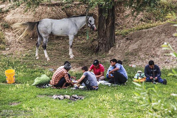 Turkmen-Horse-3