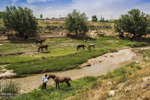 Turkmen-Horse-_8389-2