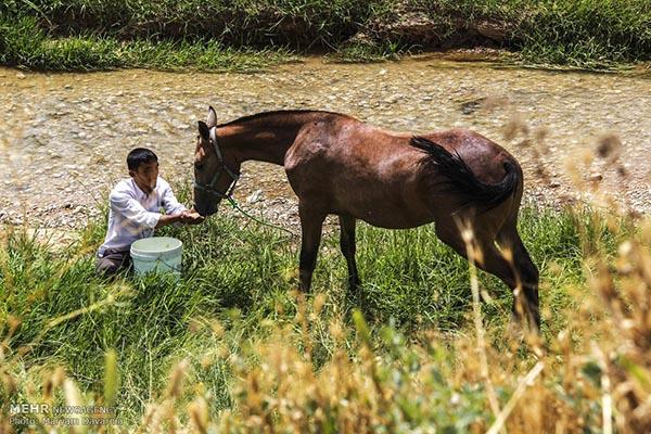 Turkmen-Horse-_8389