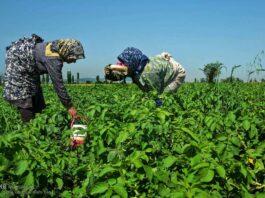 Hard-Working Women-12-