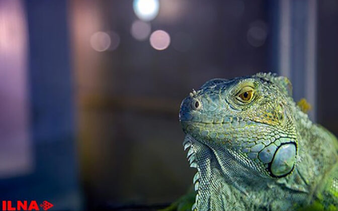 Reptiles (2)