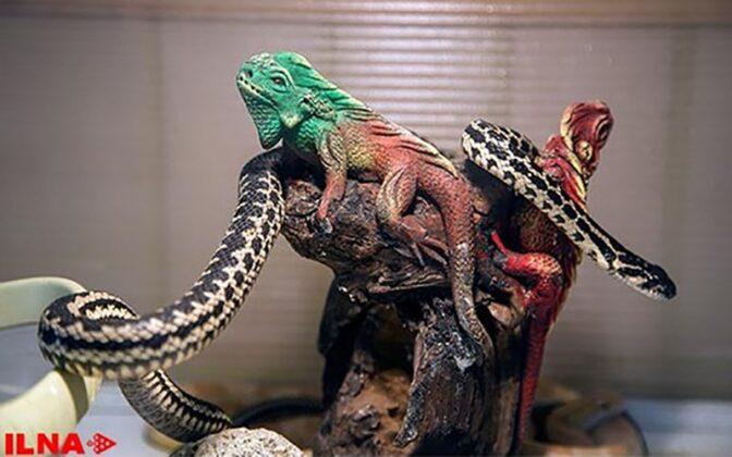 Reptiles0
