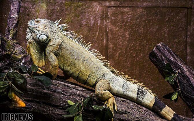 Reptiles31