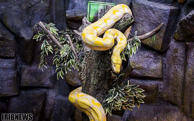Reptiles56