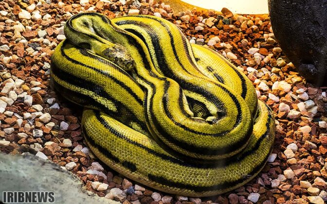 Reptiles58