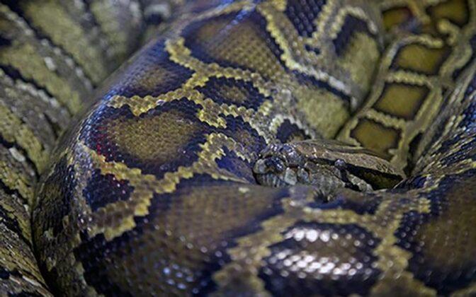 Reptiles6