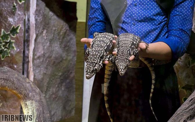 Reptiles62