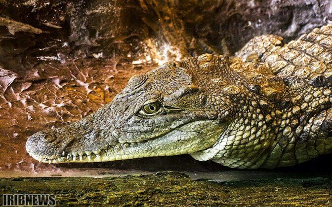 Reptiles80