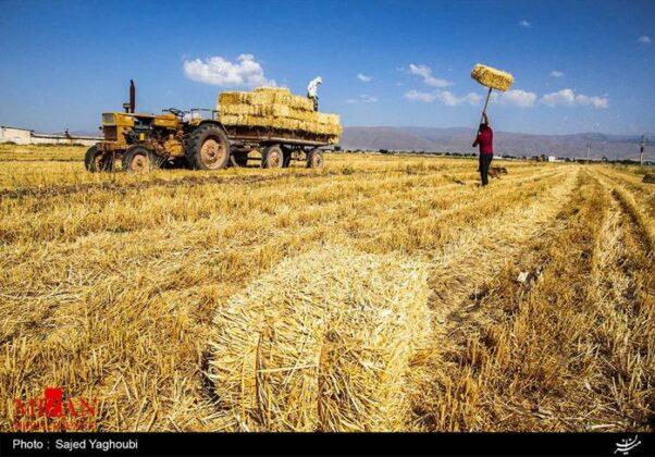 Wheat Fields _241