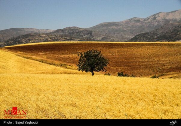 Wheat Fields _260