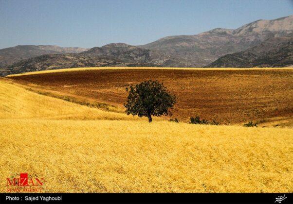 Wheat Fields _260