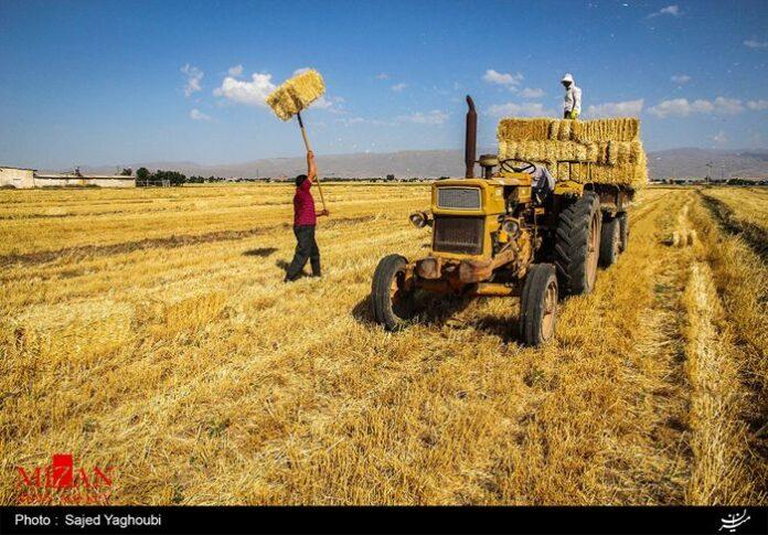 Wheat Fields _283