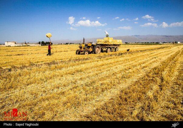 Wheat Fields _622