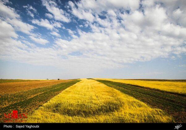 Wheat Fields _634