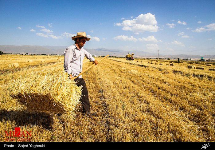 Wheat Fields _742
