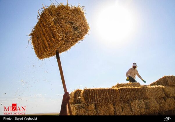 Wheat Fields _769