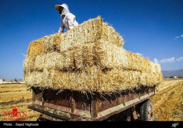 Wheat Fields _827