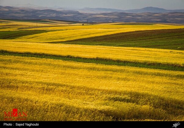 Wheat Fields _886