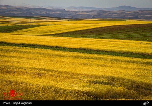 Wheat Fields _886