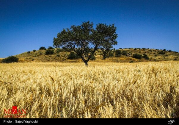 Wheat Fields _912