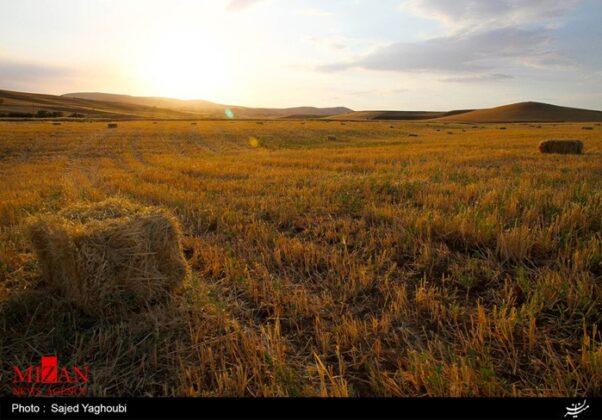 Wheat Fields _928