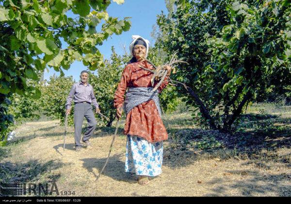 Hazelnut Harvest 7