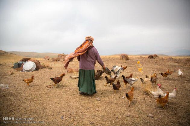 Shahsevan nomad10
