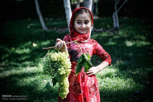 grape-festival