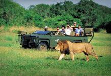 حیاط وحش آفریقای جنوبی