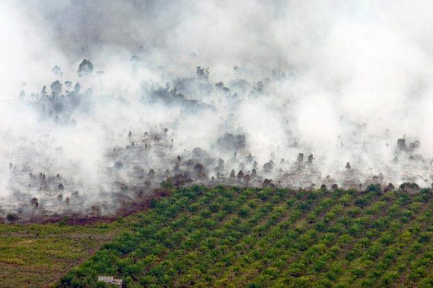 جنگلهای اندونزی