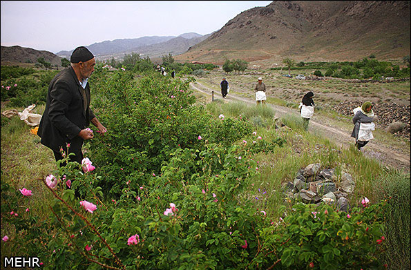 صناعة ماء الورد في ايران-24