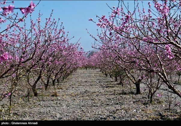 محافظة مازندران في الربيع 1