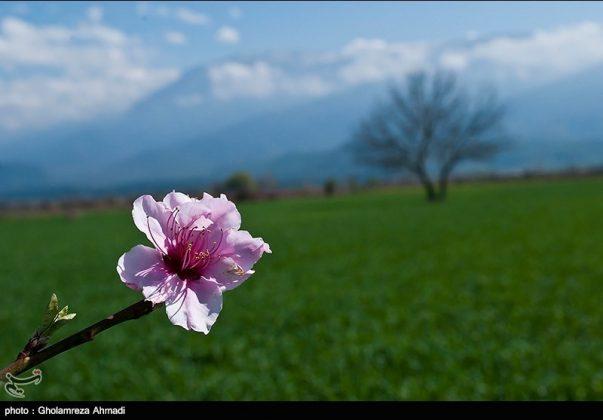 محافظة مازندران في الربيع 10
