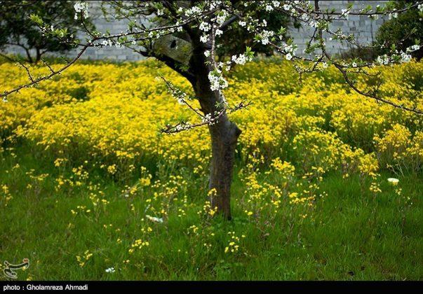 محافظة مازندران في الربيع 3