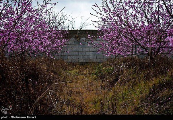 محافظة مازندران في الربيع 4
