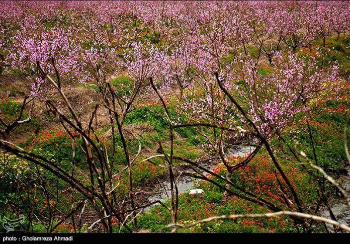محافظة مازندران في الربيع 5