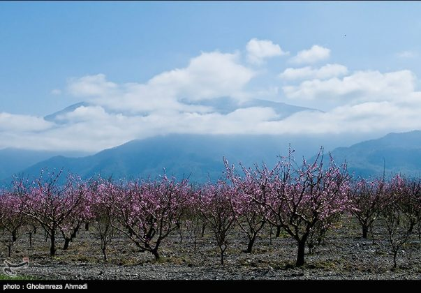 محافظة مازندران في الربيع 6