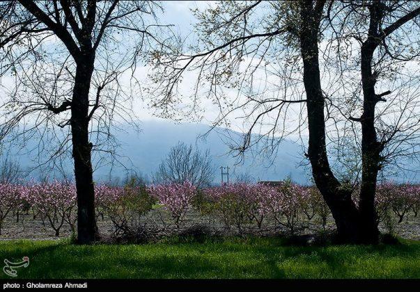 محافظة مازندران في الربيع 7