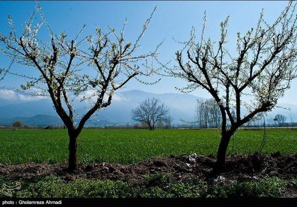 محافظة مازندران في الربيع 8