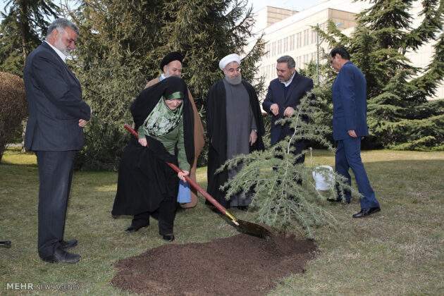Rouhani-Plants Tree