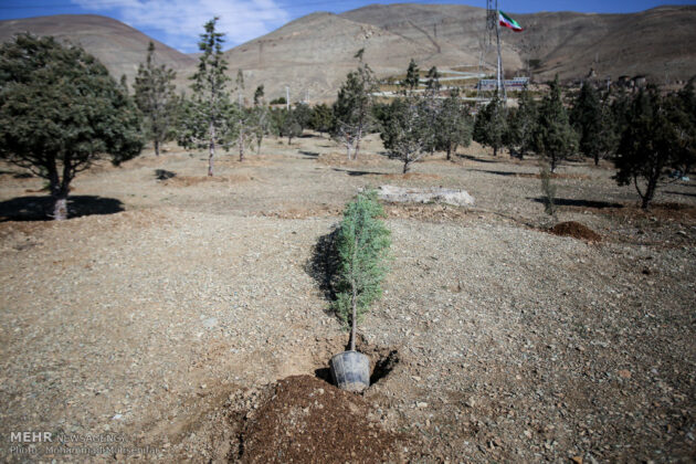 Plants Tree