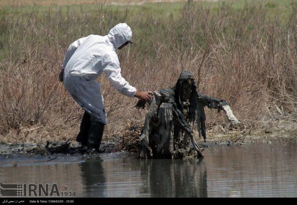 جشنواره ملی مجسمه های نمکی (3)