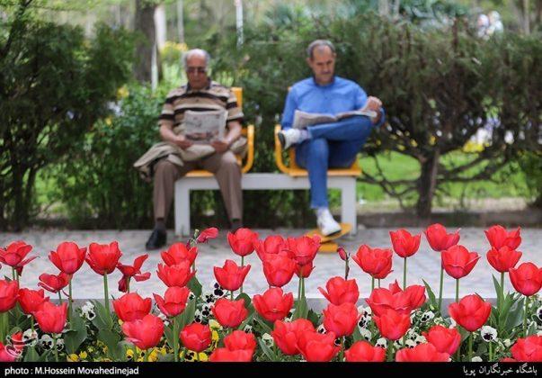 طهران.. الحدائق العامة وزهور التوليب 1