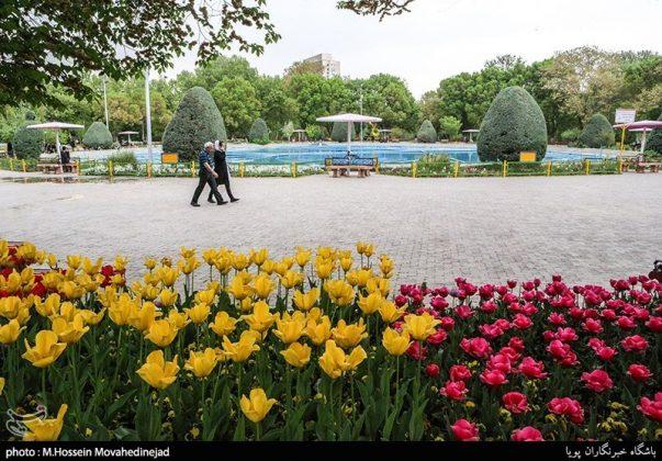 طهران.. الحدائق العامة وزهور التوليب 13