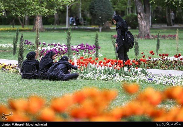 طهران.. الحدائق العامة وزهور التوليب 14
