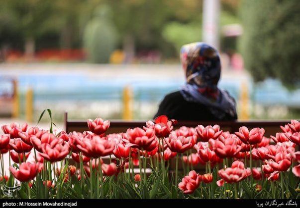 طهران.. الحدائق العامة وزهور التوليب 15