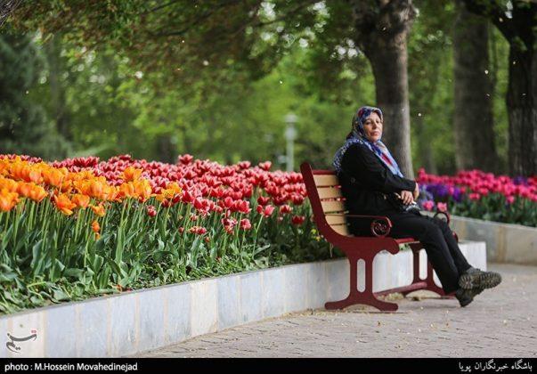 طهران.. الحدائق العامة وزهور التوليب 17