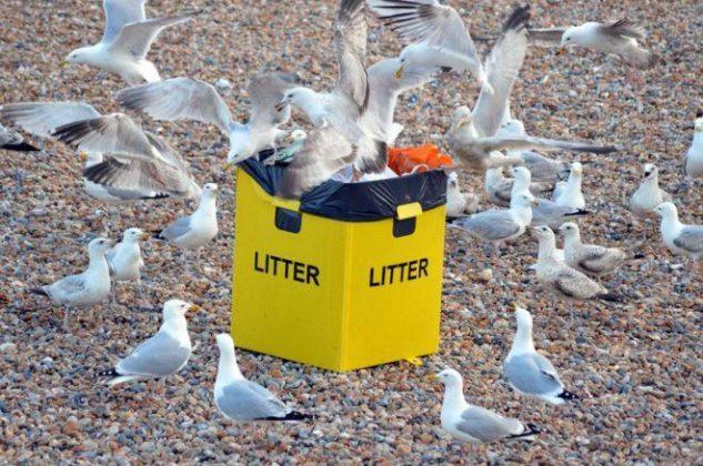 غذا خوردن پرندگان