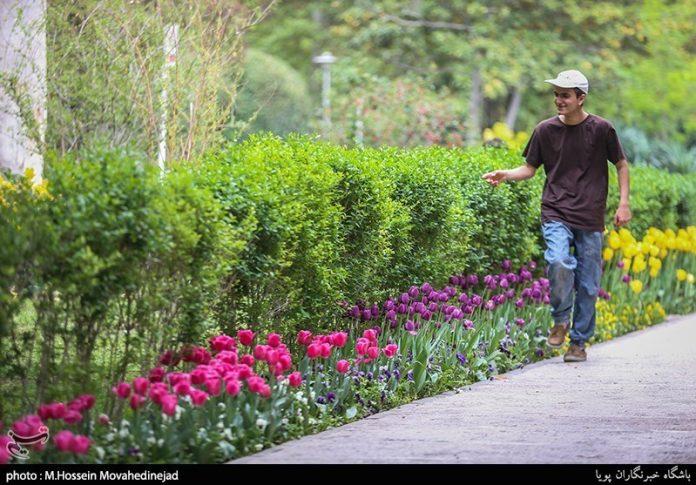 طهران.. الحدائق العامة وزهور التوليب