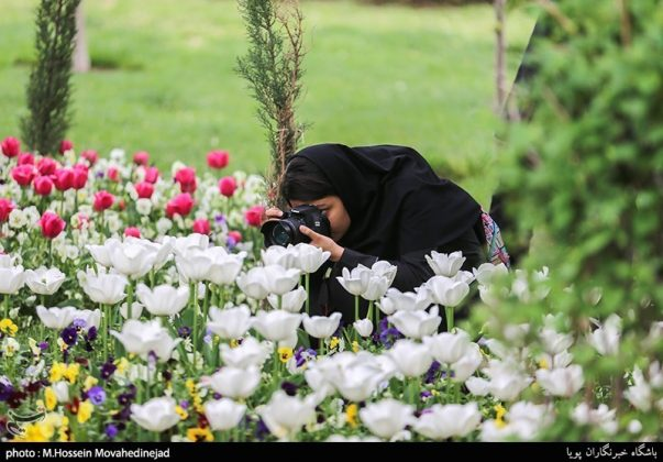 طهران.. الحدائق العامة وزهور التوليب 8